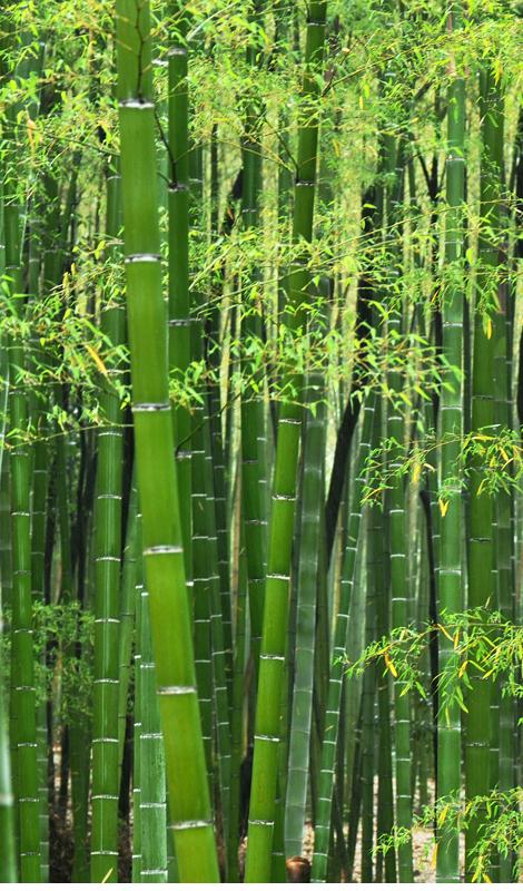 sudoku design - bambuszerdő